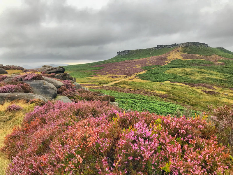 Blooming purple heather at Higger Tor on a Peak District scenic tour